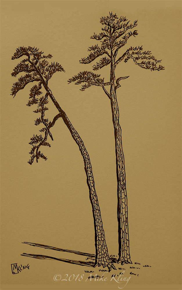 Two Pines Sepia